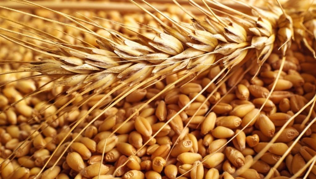 Зерновая брага